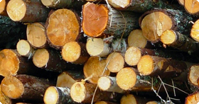 banner_forestry