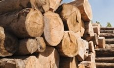 Industries_We_Serve_Forestry_Products